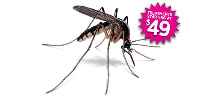 Mosquito Repellent Program